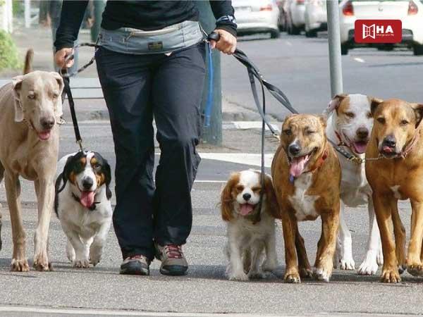 Dắt chó đi dạo công việc làm thêm ở canada