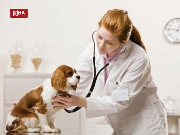Cơ hội việc làm du học Canada ngành Thú y